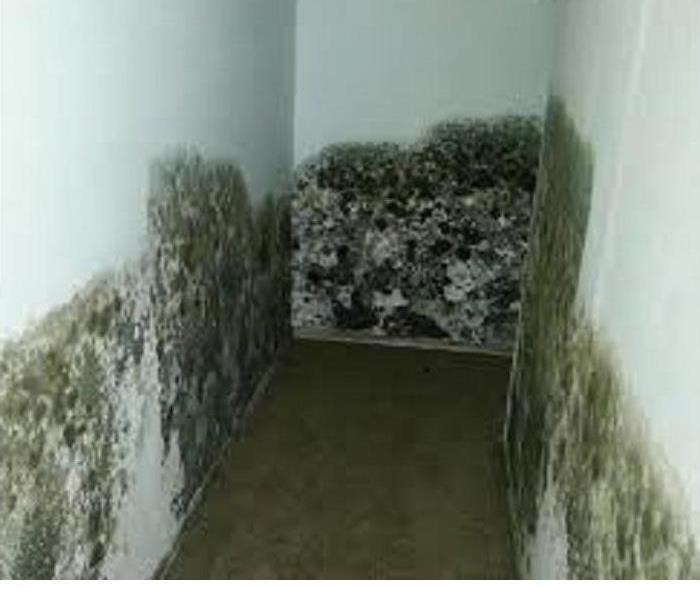 Mold Remediation Tips with MOLD